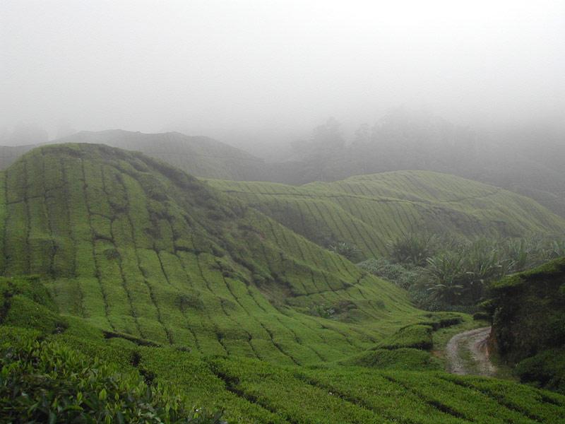 warnung reisen nach malaysia